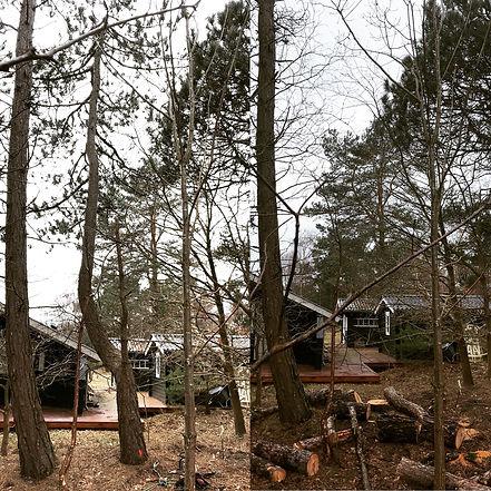 Topkapning fyrretræer Højby Odsherred