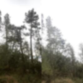 Træfældning_Kisserup_Hagested_Hølkerup.J