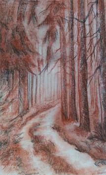 Camino boscoso