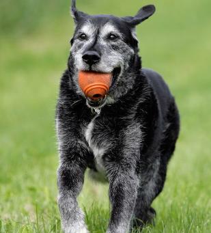 Senior Pet Care