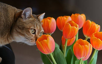Touch of Spring   Cats Wallpaper.jpg