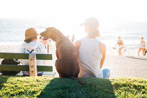 family with dog at beach.jpg
