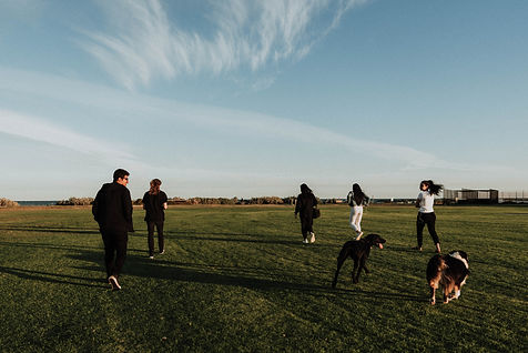 Dogs with family in field.jpg