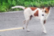 dog in road.png