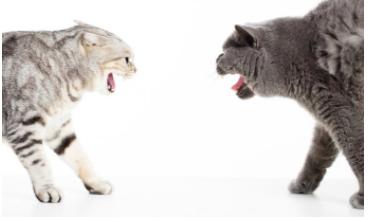 intercat aggression.png
