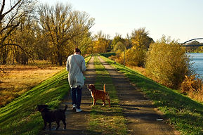 woman walking 2 dogs in fall.jpg