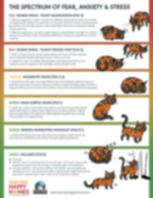 FAS-Ladder-Cat-Regular-Version-1_EDITED-