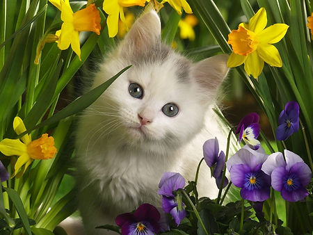 cats_kittens_daffodils_pansies_baby_anim