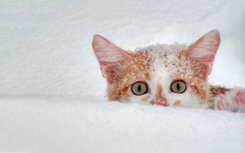 kittens-in-winter-wallpapers.jpg