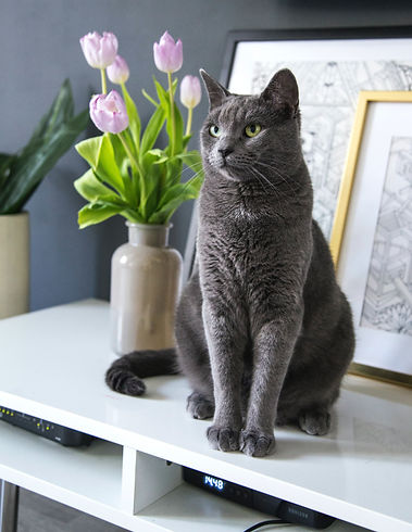 Cat with Tulips on Desk.jpg
