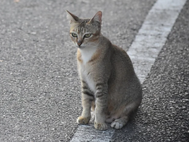 cat in road.png