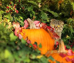 autumn-3725510_1920_edited.jpg