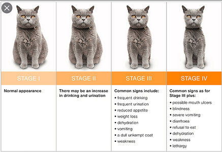CKD cat stages 2.png
