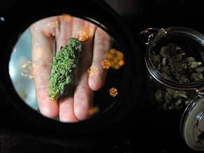 It's Not All About Potency: What Cannabis Consumers Need To Look For In Their Weed