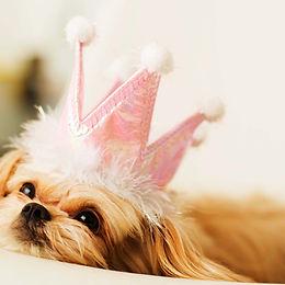 プリンセス子犬