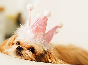 Princesse Puppy