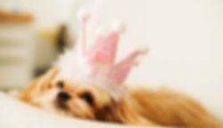 Прайс на услуги гостиницы для собак и кошек