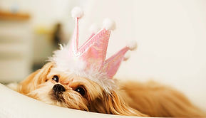A small dog laying on a bed with a pink crown