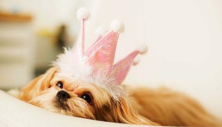 puppy wearing a pink crown