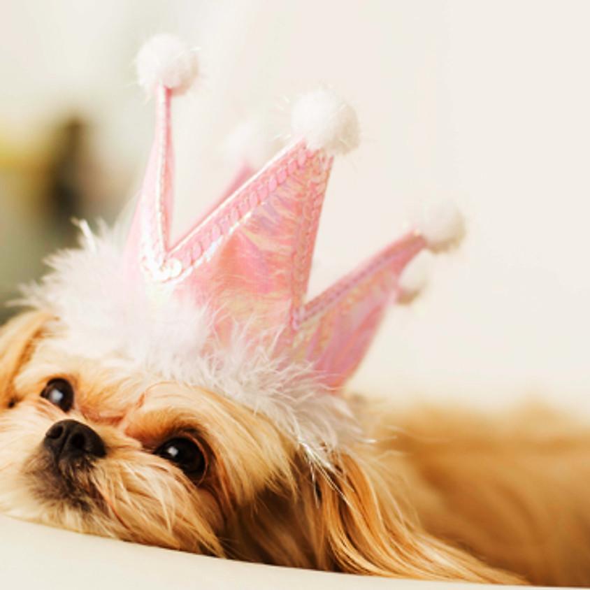 Pink (Dog) Fashion Show Location TBA