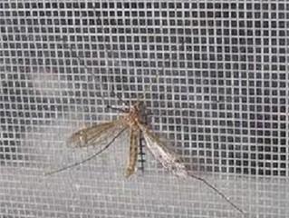 Faça você mesmo uma rede mosquiteira na janela