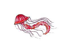 2018-Z08 Jellyfish