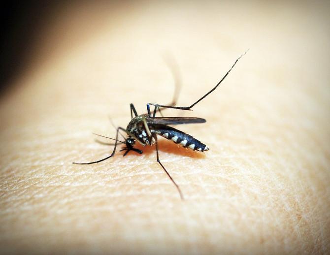 Incidência de casos de dengue aumentam 264% no Brasil, segundo dados do Ministério da Saúde