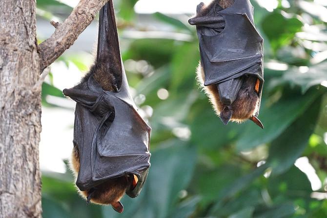 Casos de raiva em morcegos são confirmados no Rio Grande do Norte