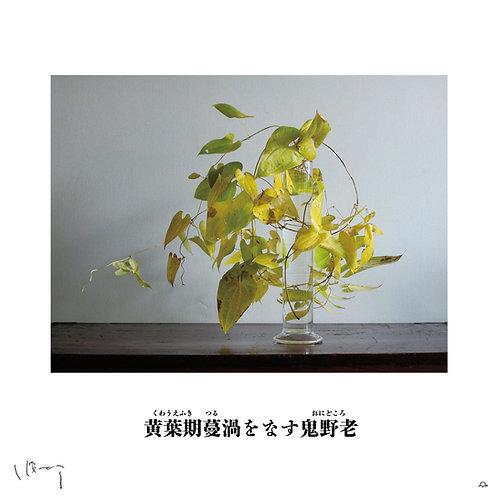 『11月(鬼野老)』 味岡伸太郎