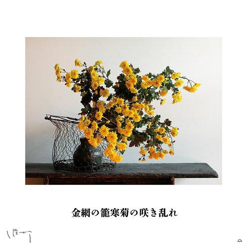 『1月(寒菊)』 味岡伸太郎