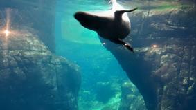 De zoo van Antwerpen