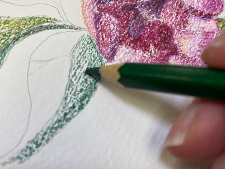 Basic Tips for Mondeluz Aquarell Watercolor Pencils