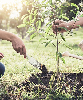 plantation-conseils.jpg