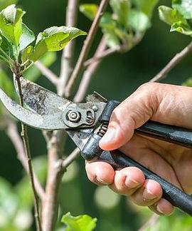 5-erreurs-a-eviter-pour-tailler-un-arbre