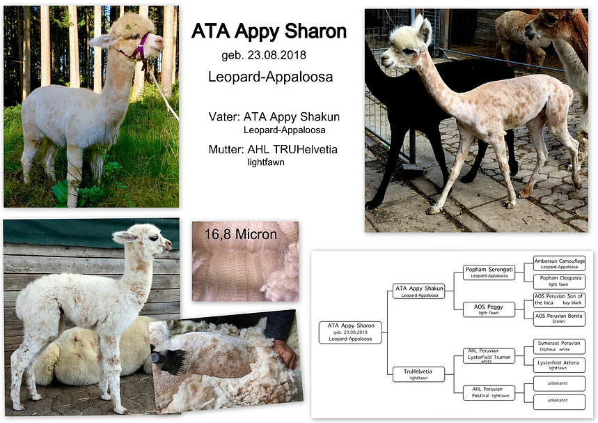 Appy Sharon-015.jpg