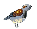 sparrow261_edited_edited.png