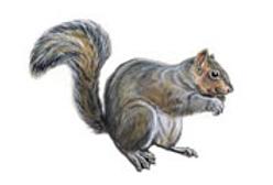 squirrel removal Alexandria