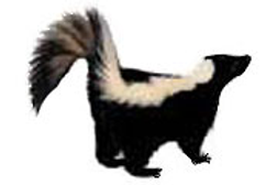 skunk removal fairfax