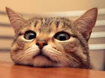 やっぱり、ネコ飼おうかな
