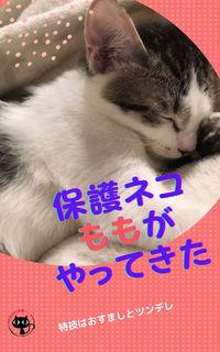 保護ネコももがやってきた.jpg