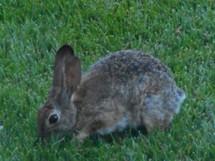 心安らぐウサギの訪問