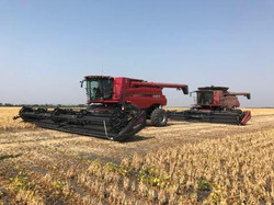 Harvesting Canola and Navy beans this weekend