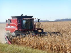end of harvest 190