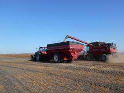 end of harvest 184