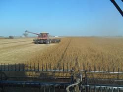 end of harvest 171