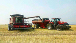 Harvesting Canola and Navy beans this weekend3