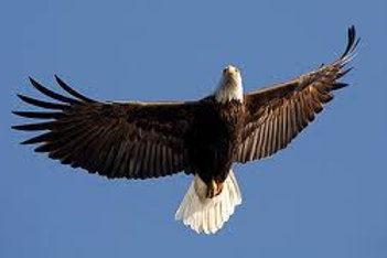 On Eagle's Wings, Fantasy on