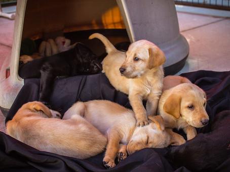 Puppy Videos @ 5 Weeks Old