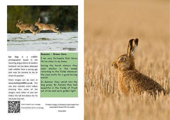 Autumn Hare Card