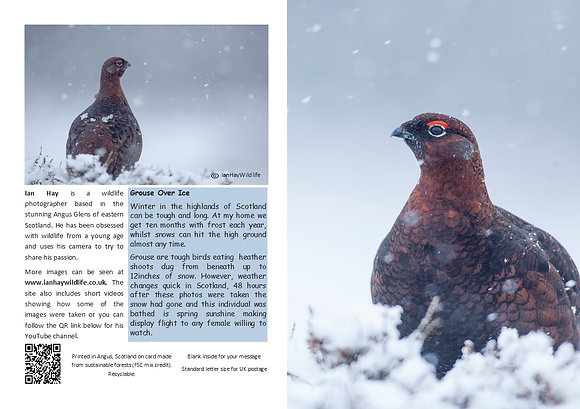 Winter Red Grouse Card